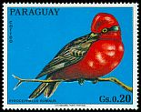 Cl: Vermilion Flycatcher (Pyrocephalus rubinus)(not catalogued)  (1973) 0