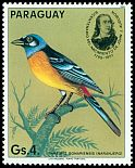 Cl: Blue-and-yellow Tanager (Thraupis bonariensis) <<Naranjero>> (not catalogued)  (1985)