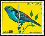 Cl: Paradise Tanager (Tangara chilensis)(not catalogued)  (1973) 0