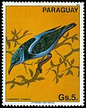 Cl: Red-legged Honeycreeper (Cyanerpes cyaneus)(not catalogued)  (1983) 0