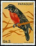 Cl: Red-breasted Blackbird (Sturnella militaris)(not catalogued)  (1983)