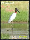 Cl: Jabiru (Jabiru mycteria) <<Tujuju>> (Repeat for this country)  new (2013)  [9/18]