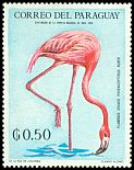 Cl: Caribbean Flamingo (Phoenicopterus ruber)(not catalogued)  (1969)