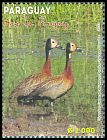 Cl: White-faced Whistling-Duck (Dendrocygna viduata) <<Siriri caribianco>>  new (2013)  [9/18]