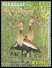 Cl: Black-bellied Whistling-Duck (Dendrocygna autumnalis) <<Siriri Ventre Negro>>  new (2013)  [9/18]