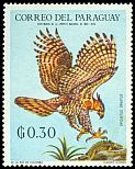 Cl: Ornate Hawk-Eagle (Spizaetus ornatus)(not catalogued)  (1969) 0