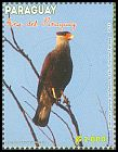 Cl: Southern Caracara (Caracara plancus) <<Carancho>> (Repeat for this country)  new (2013)  [9/18]