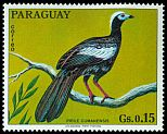 Cl: Blue-throated Piping-Guan (Pipile cumanensis)(not catalogued)  (1973) 0