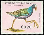 Cl: Purple Gallinule (Porphyrio martinica)(not catalogued)  (1969) 0