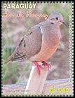 Cl: Eared Dove (Zenaida auriculata) <<Jeruti>>  new (2013)  [9/18]