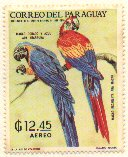 Cl: Blue-and-yellow Macaw (Ara ararauna)(not catalogued)  (1969)