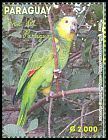 Cl: Blue-fronted Parrot (Amazona aestiva) <<Loro>> (Repeat for this country)  new (2013)  [9/18]