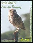 Cl: Burrowing Owl (Athene cunicularia) <<Lechuza Terrestre>>  new (2013)  [9/18]