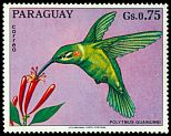 Cl: White-tailed Goldenthroat (Polytmus guainumbi)(not catalogued)  (1973)