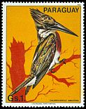 Cl: Amazon Kingfisher (Chloroceryle amazona)(not catalogued)  (1983) 0