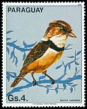 Cl: Collared Puffbird (Bucco capensis)(not catalogued)  (1983)