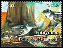 Cl: Peruvian Diving-Petrel (Pelecanoides garnotii) <<Potoyunco>>  new (2009)  [6/15]