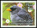 Cl: Slender-billed Finch (Xenospingus concolor) <<Semillerito Azul>>  new (2014)  [9/27]