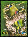 Cl: Scarlet-shouldered Parrotlet (Touit huetii) <<Periquito aliroja>>  SG 2395 (2006)  [5/17]