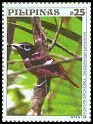 Cl: Visayan Broadbill (Eurylaimus samarensis) new (2019)  [12/6]