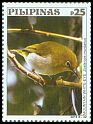 Cl: Mountain White-eye (Zosterops montanus) new (2019)  [12/6]