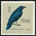 Cl: Common Raven (Corvus corax) <<kruk>>  SG 1202 (1960) 20