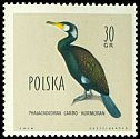 Cl: Great Cormorant (Phalacrocorax carbo) <<Kormoran>>  SG 1203 (1960) 20