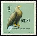 Cl: White-tailed Eagle (Haliaeetus albicilla) <<bielik>>  SG 1206 (1960) 65