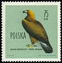 Cl: Golden Eagle (Aquila chrysaetos) <<Orzel Przedni>>  SG 1207 (1960) 70