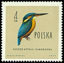 Cl: Common Kingfisher (Alcedo atthis) <<zimorodek>>  SG 1210 (1960) 325