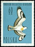 Cl: Osprey (Pandion haliaetus) <<rybol&oacute;w>>  SG 1487 (1964) 15