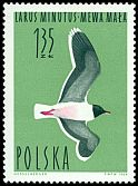 Cl: Little Gull (Larus minutus) <<mewa mala>>  SG 1489 (1964) 30