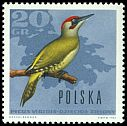 Cl: Green Woodpecker (Picus viridis) <<dzieciol zielony>>  SG 1698 (1966) 10