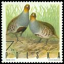 Cl: Grey Partridge (Perdix perdix) SG 1974 (1970) 100