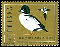 Cl: Common Goldeneye (Bucephala clangula) <<gagol>>  SG 3014 (1985) 50