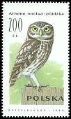 Cl: Little Owl (Athene noctua) <<p&oacute;jdzka>>  SG 3320 (1990) 25