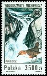Cl: White-throated Dipper (Cinclus cinclus) <<pluszcz>>  SG 3408 (1992) 65