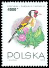 Cl: European Goldfinch (Carduelis carduelis) <<szczygiel>>  SG 3488 (1993) 70