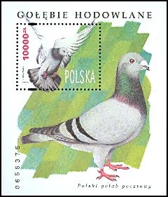 Cl: Rock Pigeon (Columba livia) SG 3542 (1994)  [4/33]