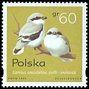 Cl: Northern Shrike (Lanius excubitor) <<srokosz>>  SG 3596 (1995) 30