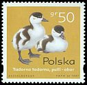 Cl: Common Shelduck (Tadorna tadorna) <<ohar>>  SG 3720 (1997) 15