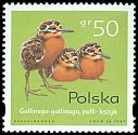 Cl: Common Snipe (Gallinago gallinago) <<kszyk>>  SG 3722 (1997) 15