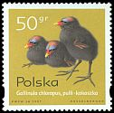 Cl: Common Moorhen (Gallinula chloropus) <<kokoszka>>  SG 3723 (1997) 15