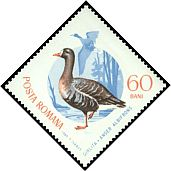 Cl: Greater White-fronted Goose (Anser albifrons) <<Girlita>>  SG 3308 (1965) 75