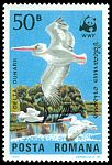 Cl: Dalmatian Pelican (Pelecanus crispus)(Repeat for this country)  SG 4899 (1984)  [3/7]