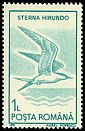 Cl: Common Tern (Sterna hirundo) SG 5324 (1991)