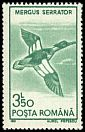 Cl: Red-breasted Merganser (Mergus serrator) SG 5328 (1991)