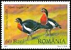 Cl: Red-breasted Goose (Branta ruficollis) <<Gasca cu gat rosu>> (Repeat for this country)  SG 6809 (2007)  [4/19]