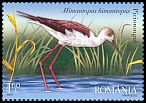 Cl: Black-winged Stilt (Himantopus himantopus) <<Piciorongul>>  SG 6946 (2009)  [6/7]