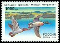 Cl: Common Merganser (Mergus merganser) SG 6557 (1995)
